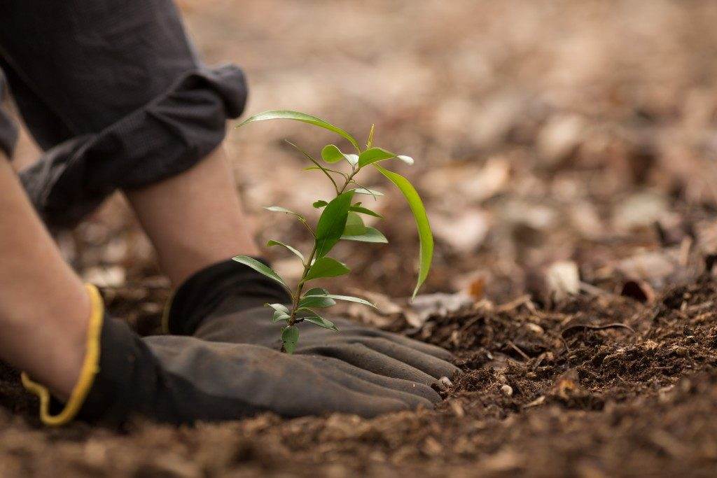 hands planting a small plant