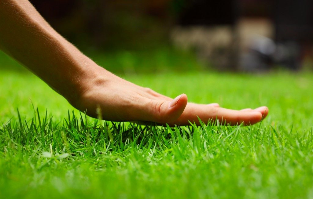 hand feeling the grass